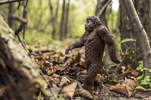 Bigfoot (Sasquatch) creatures are most seen where the fringes of society and wilderness overlap